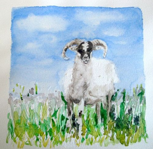 Sheep (Bettina)